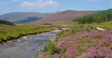 Flowers of Scotland – where will we see your likes in
