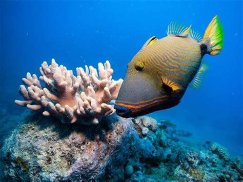 The Great Barrier Reef, Australia Holidays 2019/2020